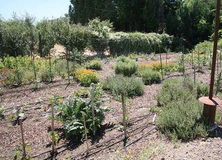 1new_sammys_cowboy_bistro_organic_vegetable_garden