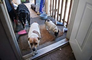 1clos_saron_oregon_house_dogs