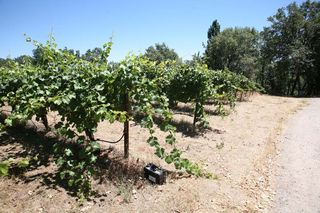 11la_clarine_pleasant_valley_mourvedre