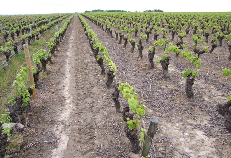 1muscadet_conventional_vineyard_moon_surface