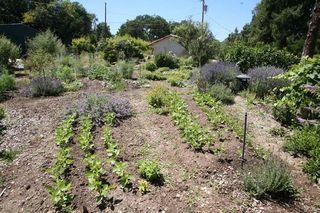 1new_sammys_bistro_organic_vegetable_garden