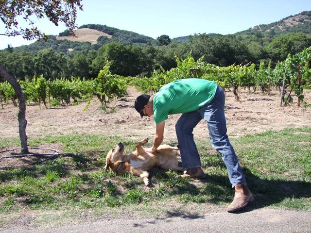 1arnot_roberts_in_a_vineyard
