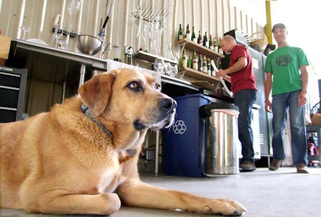 1arnot_roberts_winery_dog_watching_us