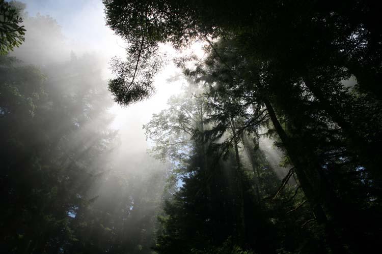 1avenue_of_the_giants_california_fog