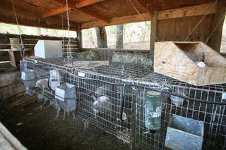 1clos_saron_house_oregon_rabbits
