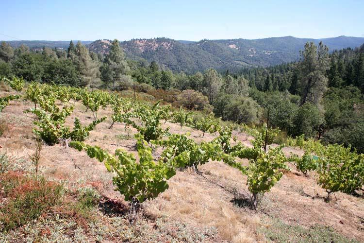 1la_clarine_hank_beckermeyer_vineyard_mountain