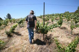 1la_clarine_hank_beckermeyer_walking_vines