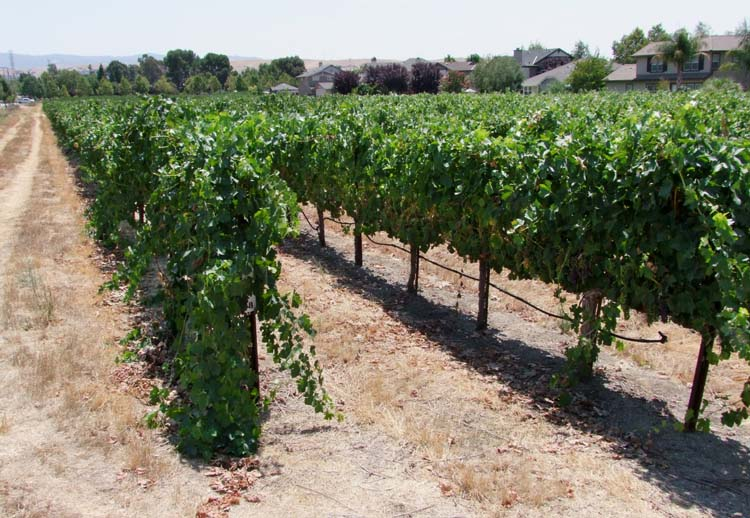 1valor_winery_vineyard_outside_livermore