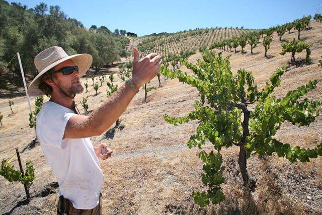 1AmBith_dry-farmed_vineyard_frederic_ballario