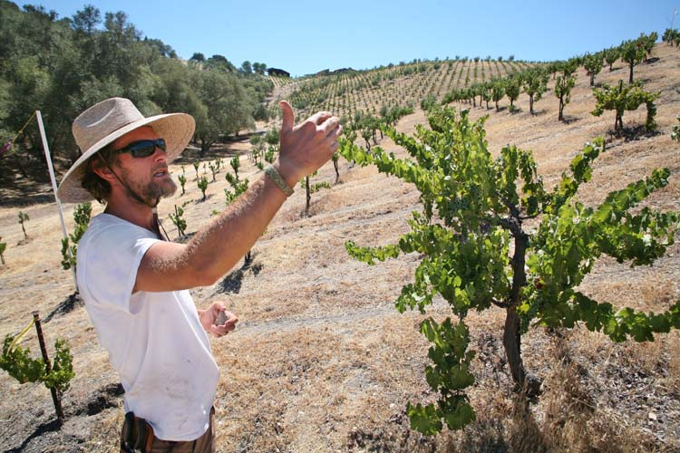 1AmBith_dry-farmed_vineyard_frederic_ballario