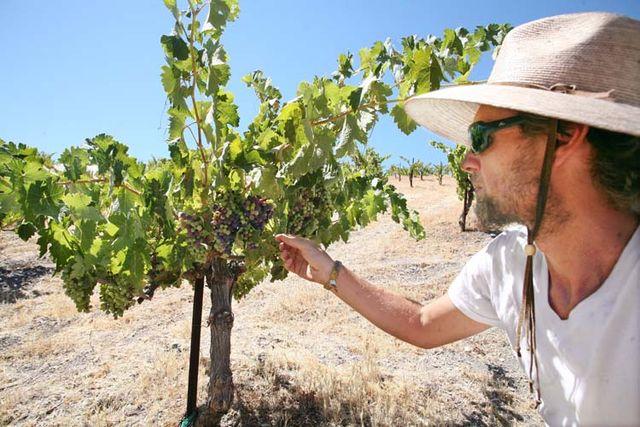 1AmBith_dry-farmed_vineyard_goblet