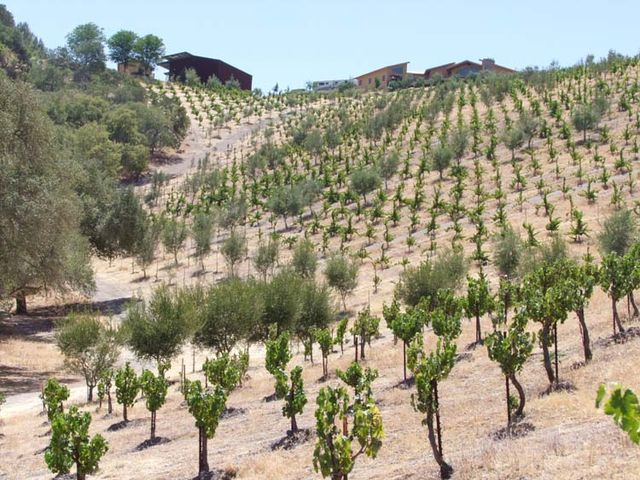 1AmBith_vineyard_facility_from_below