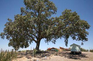 1AmBith_estate_hen_coop_tree