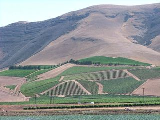 1aubonclimat_vineyards_slope