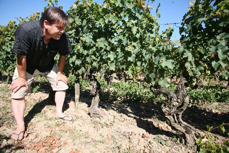1domaine_R_130-year-old_vines_cab_franc