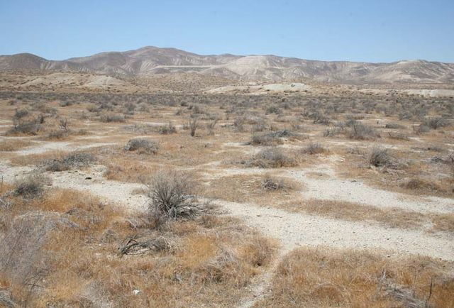 1US_petroleum_dry_bushes2