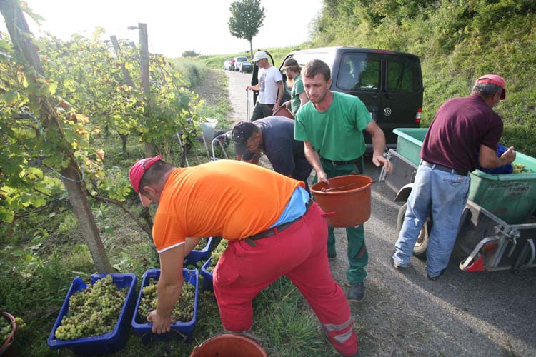 1enderle_moll_last_grapes_of_day