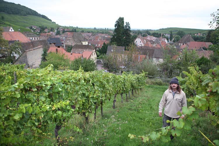 1andre_durrmann_andlau_grassy_vineyard