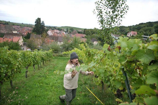 1andre_durrmann_lyre_long_vine_branch