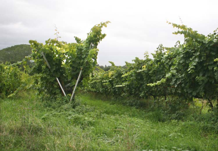 1andre_durrmann_andlau_alsace_riesling_in_lyre