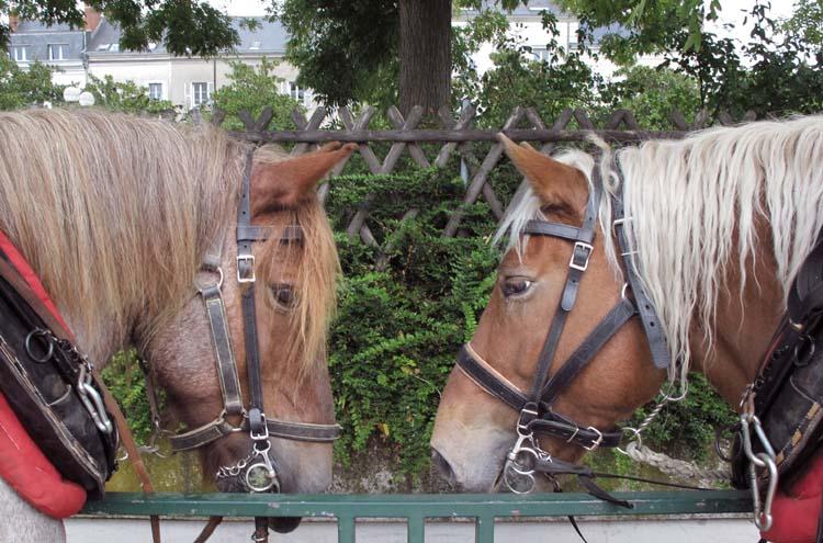 1olivier_cousin_benoit_courault_horses