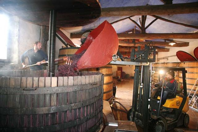 1marcel_lapierre_beaujolais_transfering_macerated_clusters