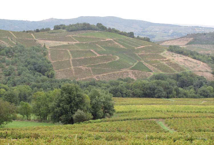 1france_gonzalvez_beaujolais_vineyards_above_blace
