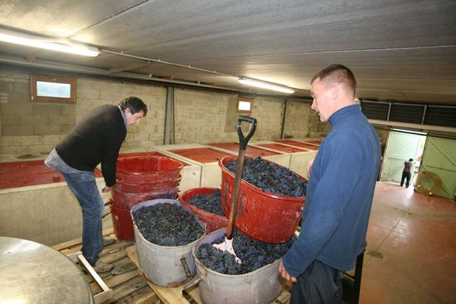 1jean_foillard_grape_baskets_vatroom_from_above