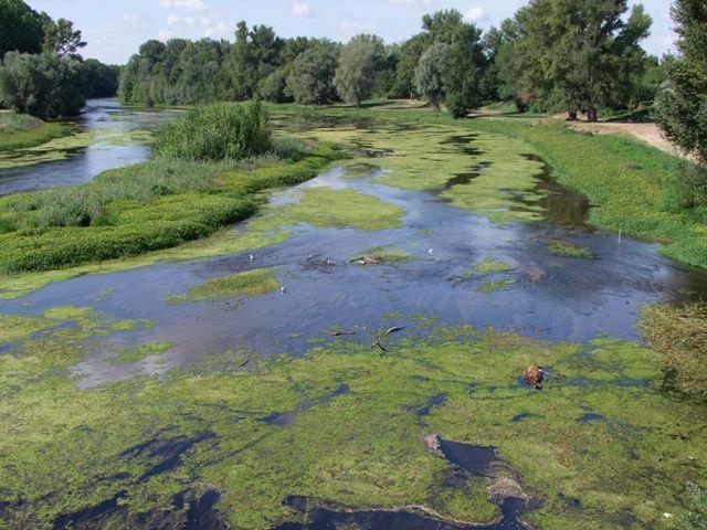 1news_selles-sur-cher_plantes_aquatiques