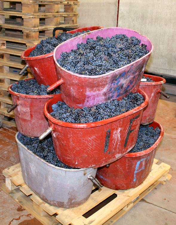 1jean_foillard_last_grape_baskets2013