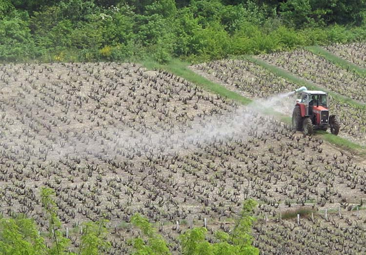 1spraying_tractor_vineyard