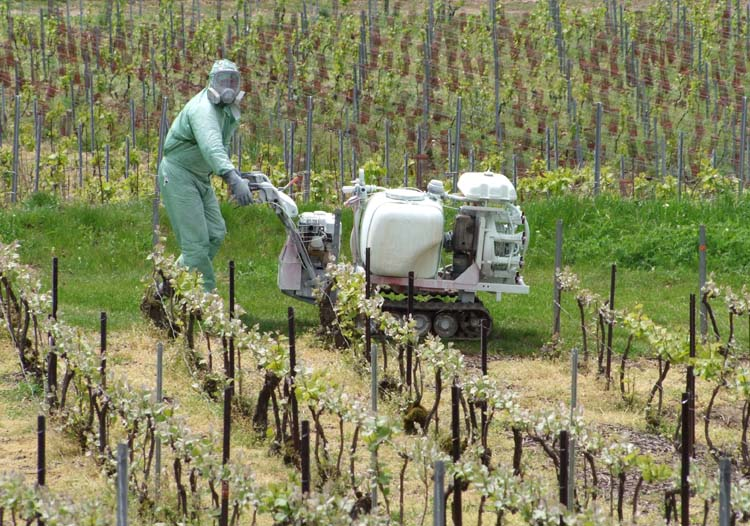 1champagne_worker_walk_spraying_machine