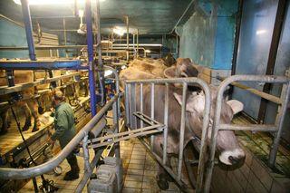 1abbaye_pierre_qui_vire_milking_room_burgundy