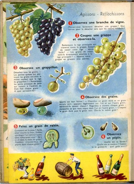 1lecons-de-choses_le_raisin