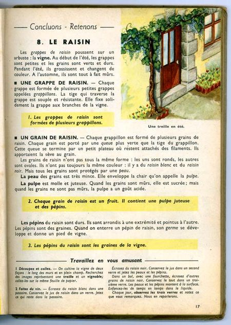1lecons-de-choses_le_raisin_texte