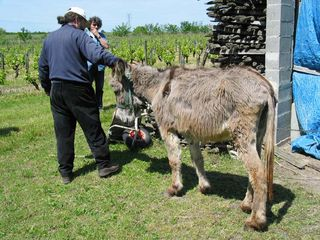 1courtois_cailloux_donkey
