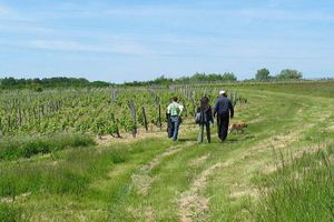 1courtois_cailloux_vineyard_stroll