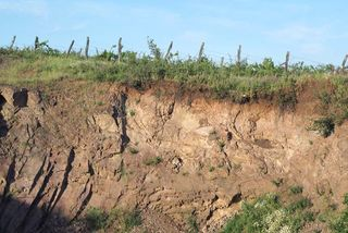1balint_losonci_vineyard_soil_thin_layer
