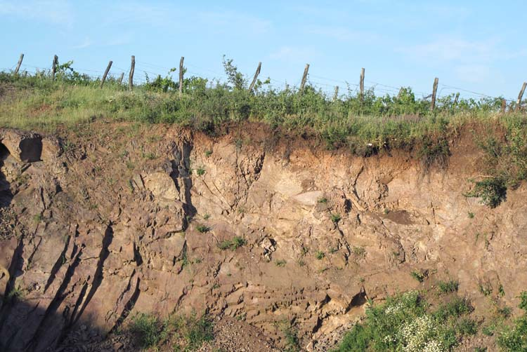 1balint_losonci_vineyard_soil_thin_layer