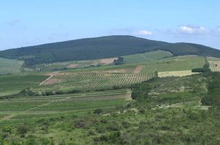 1gabor_karner_vineyards_szucsi