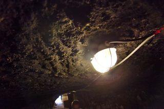 1gabor_karner_cellar_mold