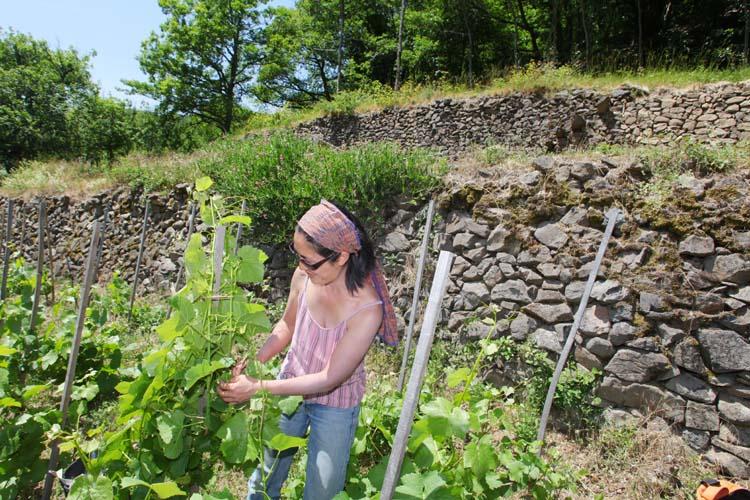1mito_inoue_auvergne_murs_vineyard_wall