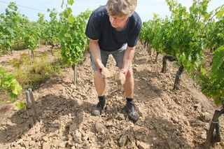 1richard_leroy_montbenault_chenin_rocks_soil