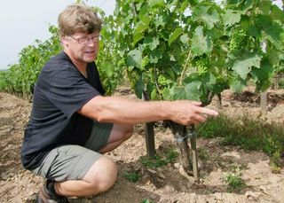 1richard_leroy_anjou_chenin_under_row