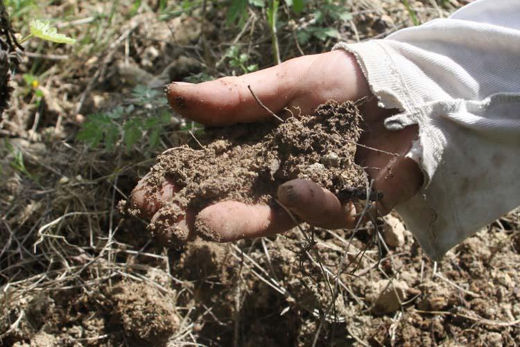 1maisonsbrulees_herdeleau_healthy_soil