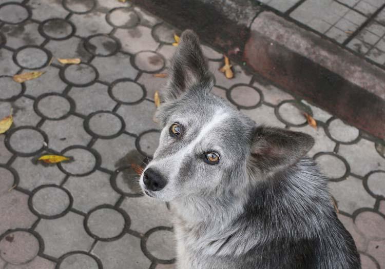 1donetsk_grey_dog