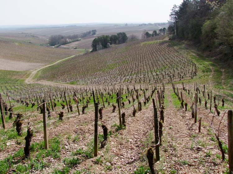 1courgis_chablis_beauregard_terroir