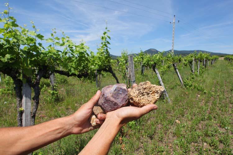 1balint_losonci_vineyard_soil_volcanic
