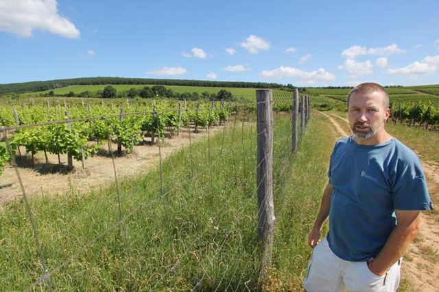 1gabor_karner_fenced_vineyard