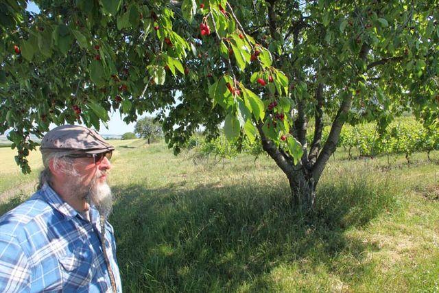 1arbre_blanc_auvergne_vineyard_cherry_tree